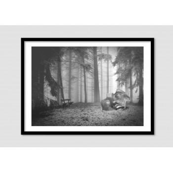 """Photomontage noir et blanc """"Mystic forest"""""""