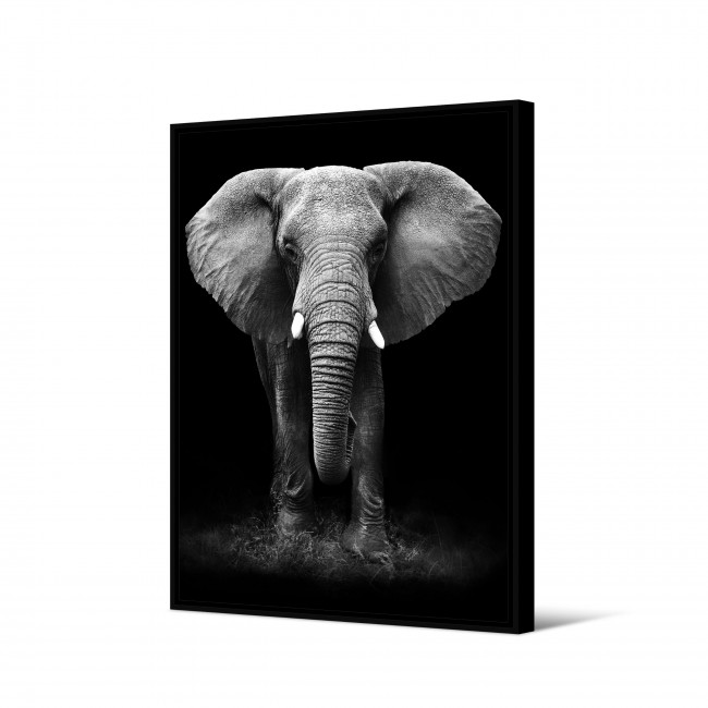 Kwilu - Toile imprimée éléphant 92,5x65cm