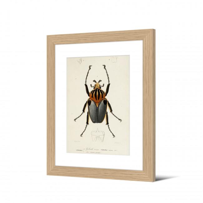 Harskamp - Image encadrée insecte 50x40cm