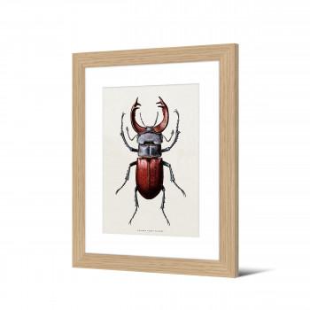 Wangels - Image encadrée insecte 50x40cm