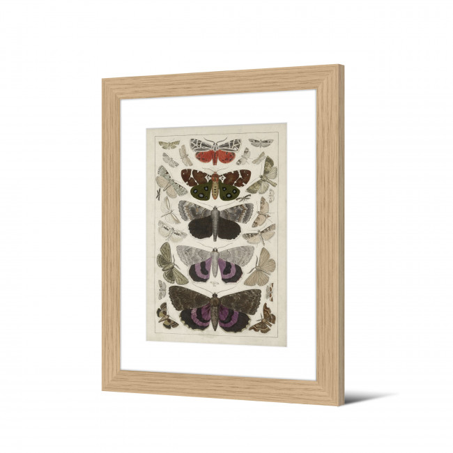 Freswick - Image encadrée papillons 50x40cm