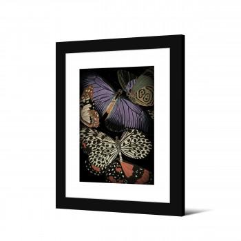 Lyness - Image encadrée papillons 50x40cm