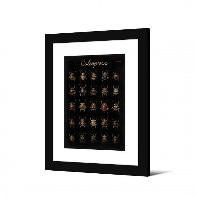 Gorseness - Image encadrée insectes 50x40cm