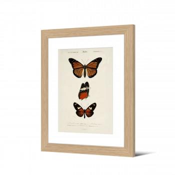 Torikko - Image encadrée papillons 50x40cm