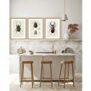 Fulda - Image encadrée insectes 50x40cm