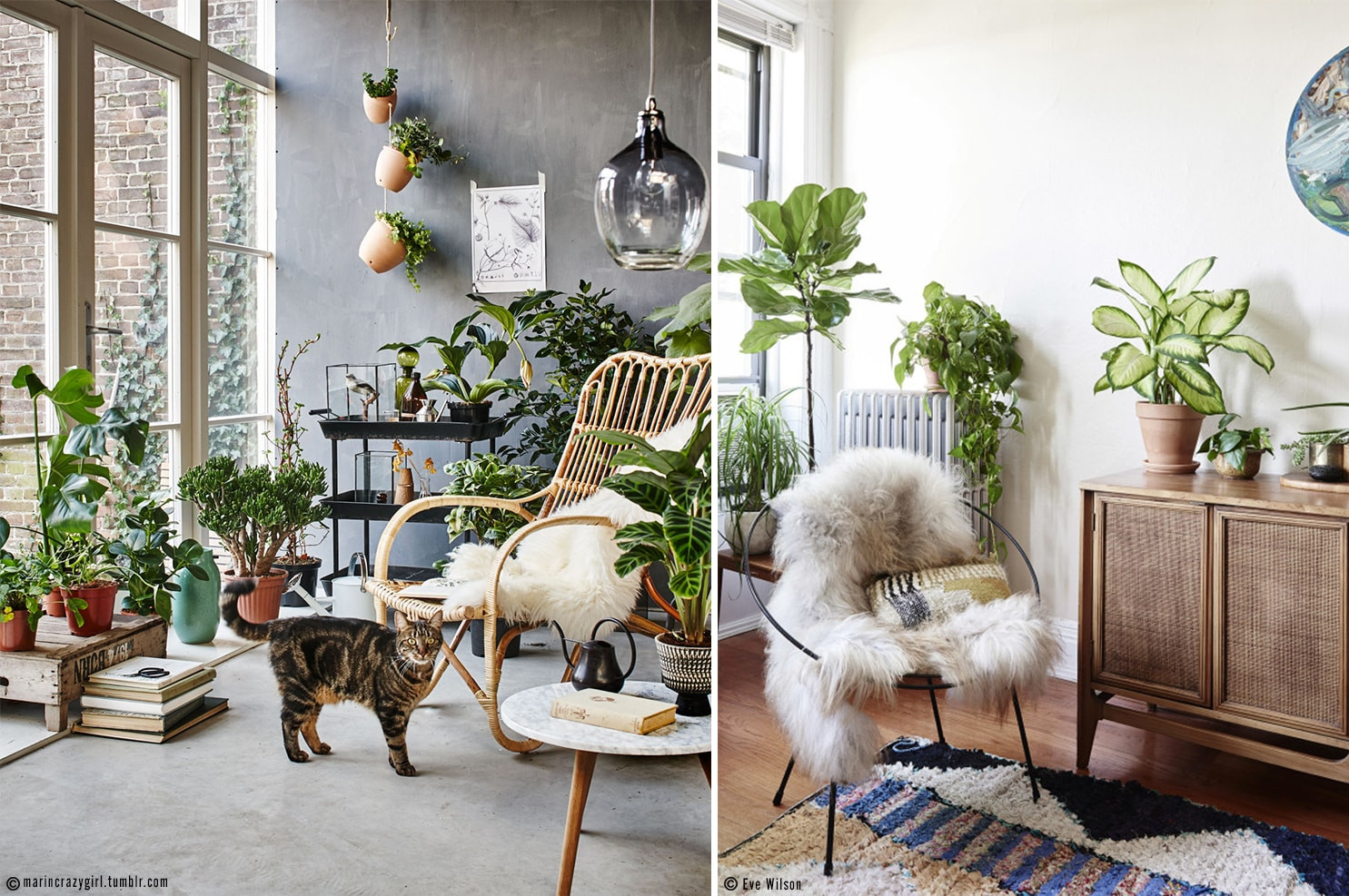 interieur boheme et jungle